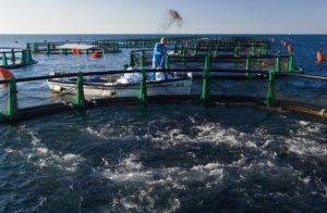 Fonda: »Na-redili bomo najboljšo ribo na svetu!«