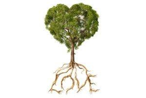 Valentin ima ključ od korenin, ne le src