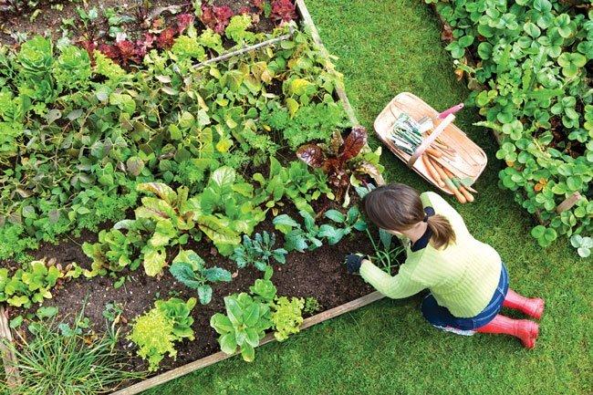 Zelenjavni vrt za začetnike