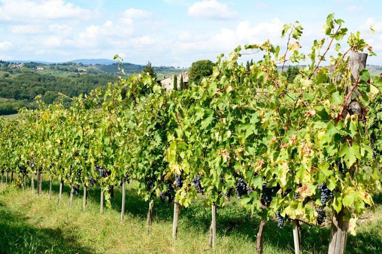 Zaščita vinske trte - predavanje (Sveti Andraž, Juršinci)