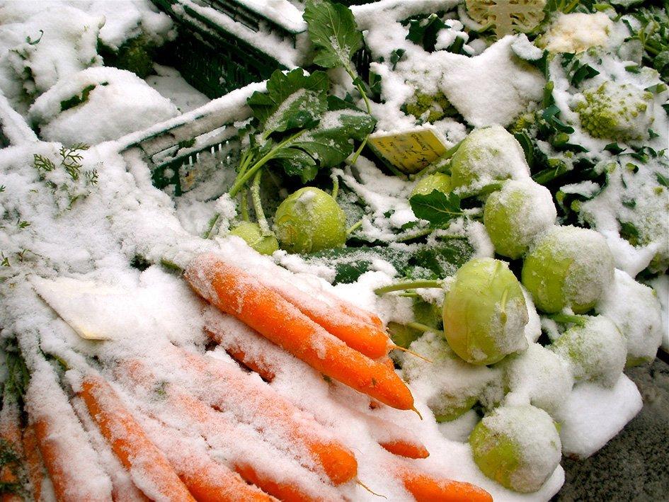 Zimska zelenjava