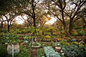 V permakulturnem vrtu