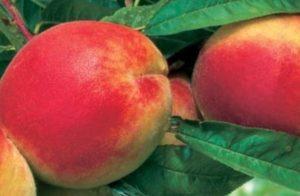 Nacionalni projekt promocije lokalne hrane