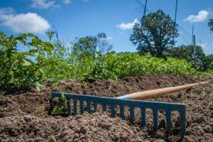 Prihodnost bolj kakovostne hrane je v ekološki pridelavi