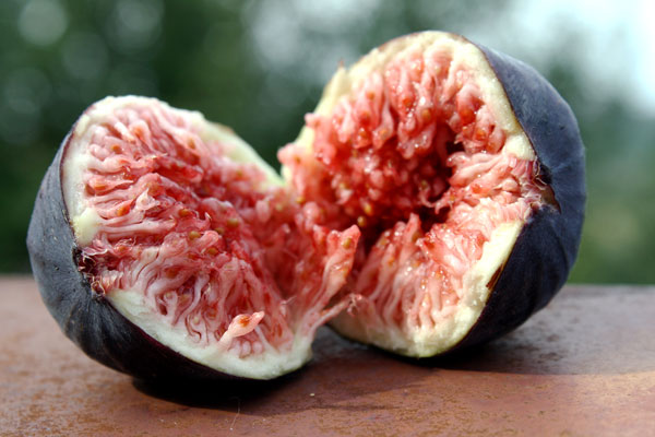 Fige, najbolj sladko sezonsko sadje poletja