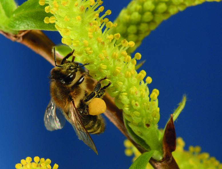 Svetovni dan čebel ali dan za naše krilate prijatelje