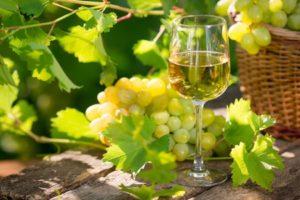 Slovenci v letu 2014/15 dosegli kar osemdesetodstotno stopnjo samooskrbe z vinom!