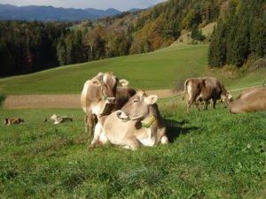 »Izbrana kakovost – Slovenija« prinaša potrošnikom in kmetom dolgoročno dodano vrednost