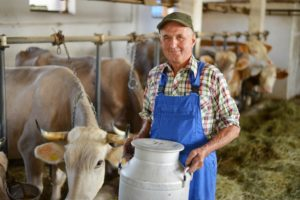 Koliko slovenskega je v litru mleka, ki ga kupimo?