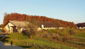 Slovensko mleko - kmetija Koren