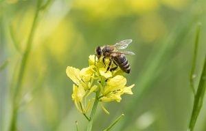 Skrbimo za čebele, saj čebele skrbijo za nas