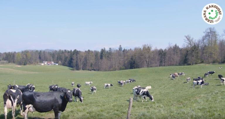 [VIDEO] O hrani, ki ohranja delovna mesta