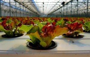 Živila v biorazgradljivi embalaži