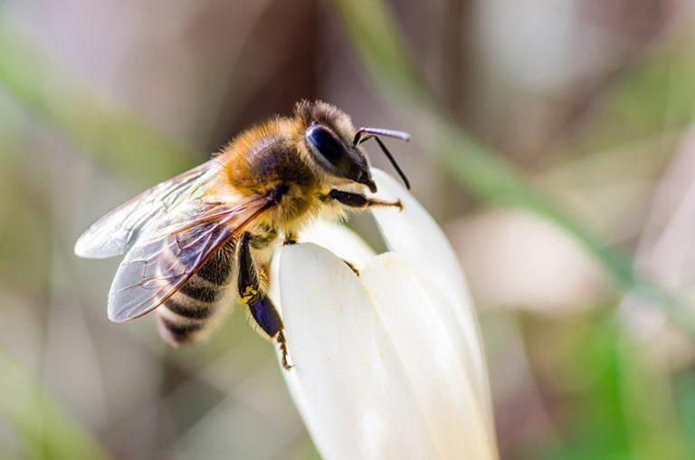 Kako smo obeležili drugi svetovni dan čebel