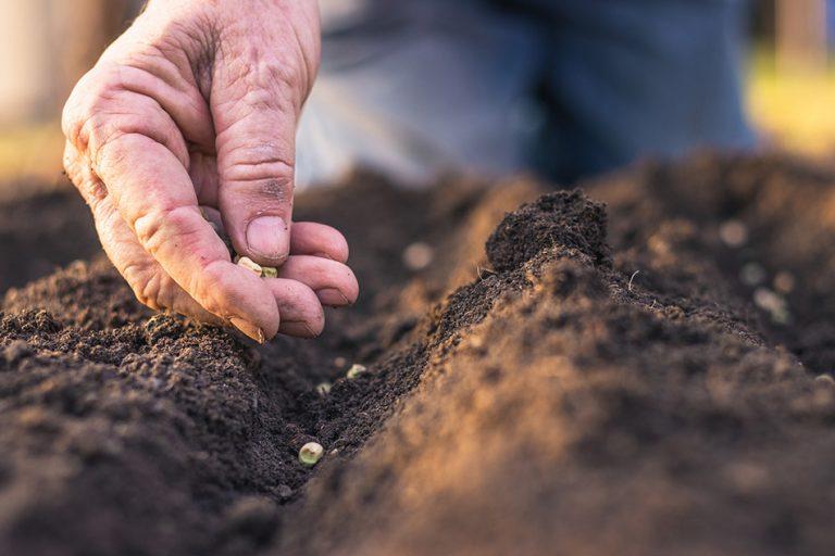 Domača semena