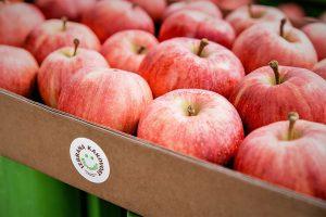 Jabolka v kartonskem zaboju