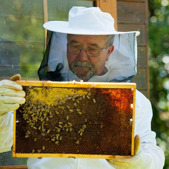 Čebelar si ogleduje satje